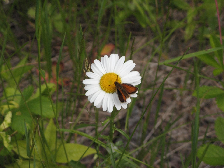 Barnes Pond Flower