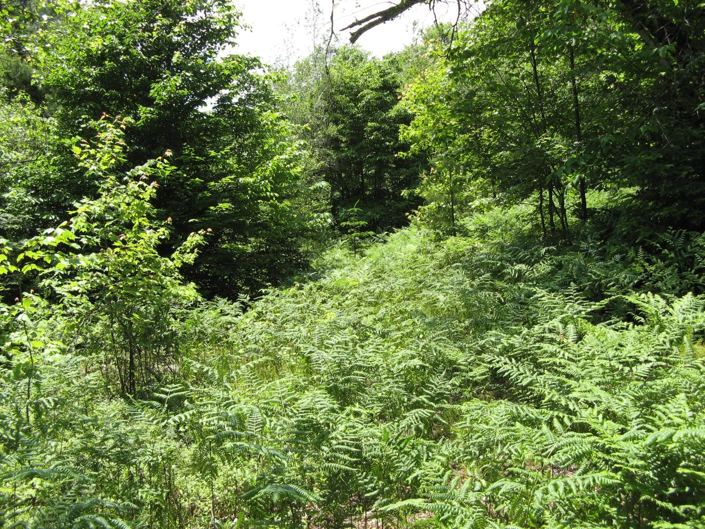 Barnes Pond Trail
