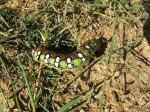 Big Colorful Caterpillar