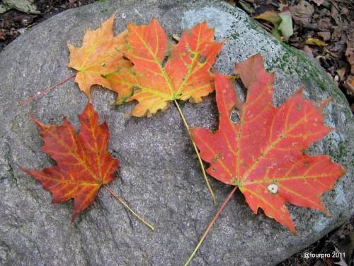 Adirondack Foliage 2011