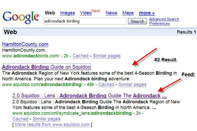 Google Search - adirondack birding