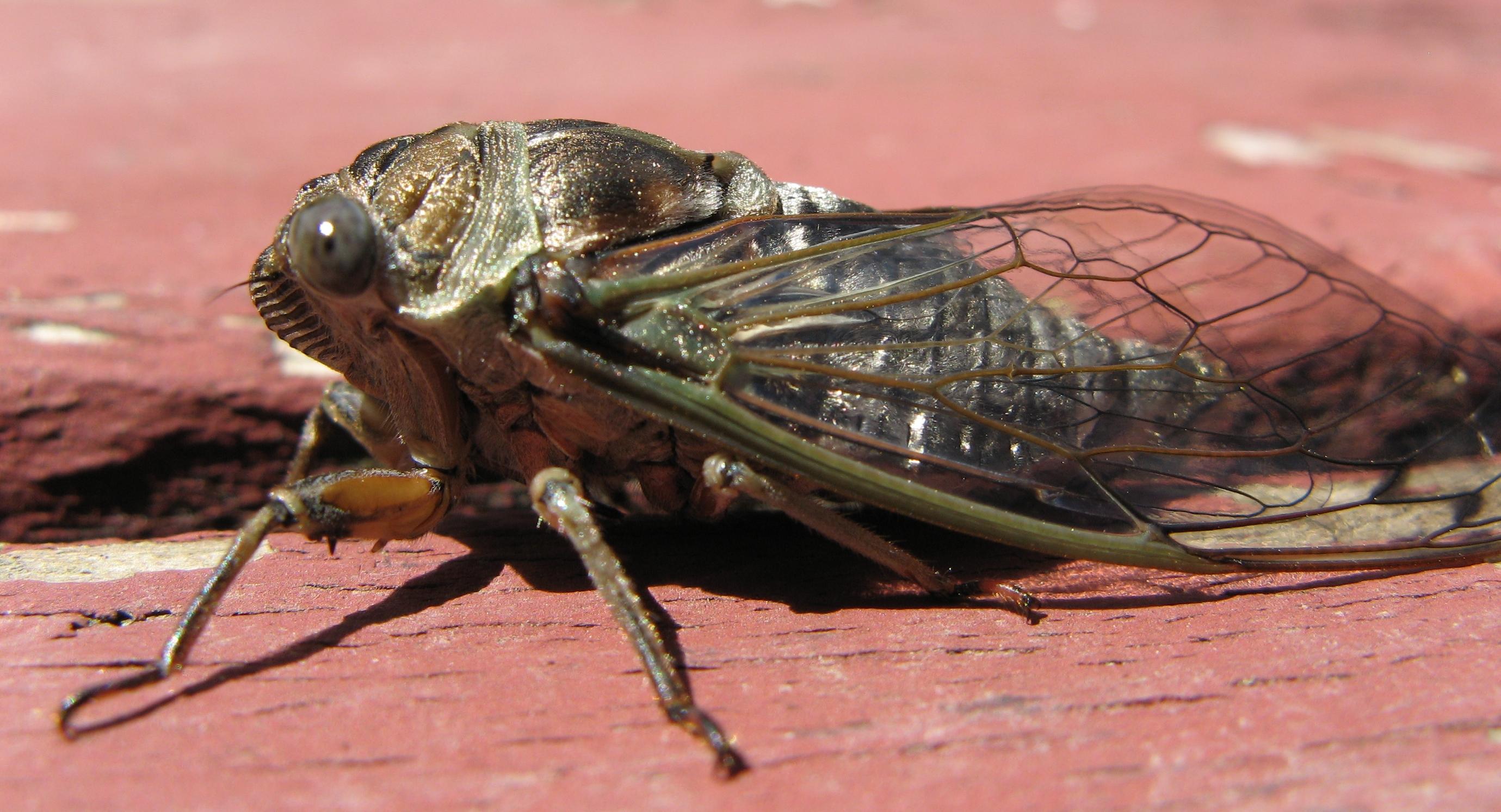 Big Adirondack Bug 3