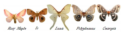 Moths