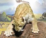 Saber Tooth Cat