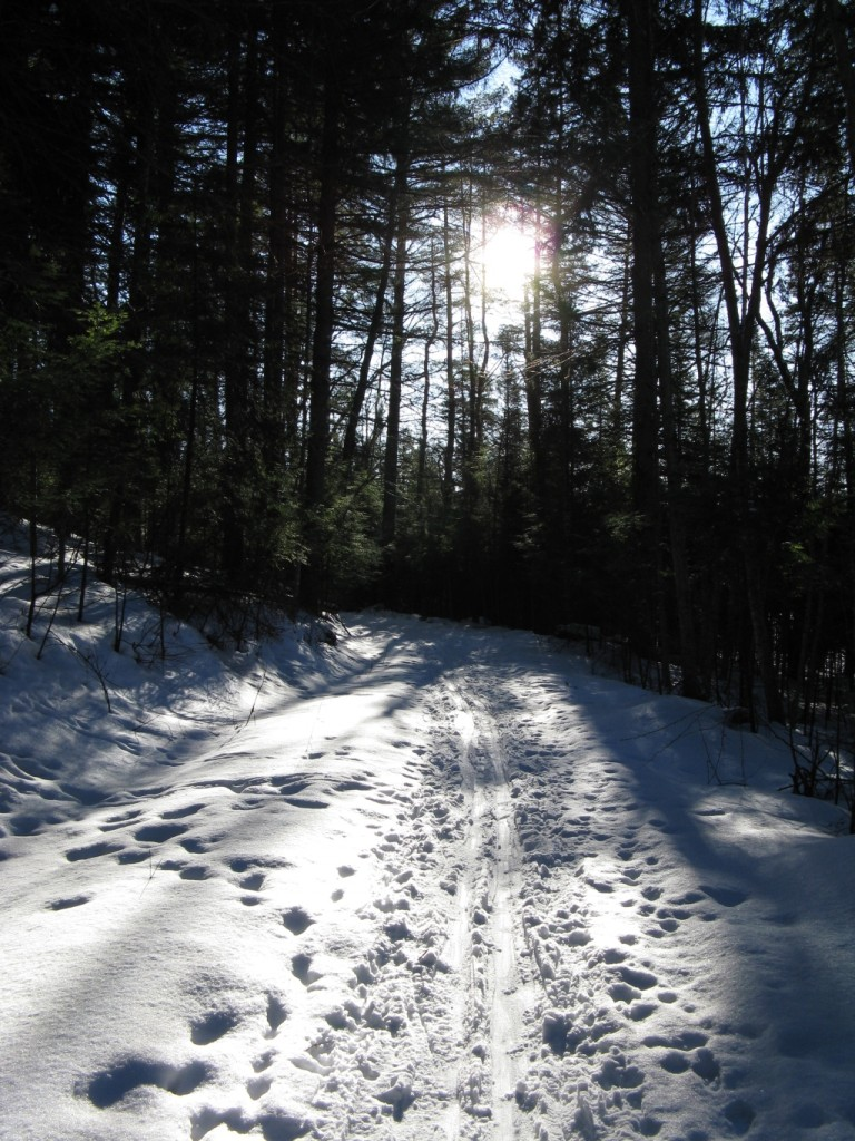 Trail to Raquette Falls