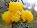 Fungus or Lichen?