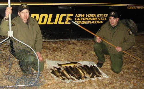 ECOs and Poached Walleye