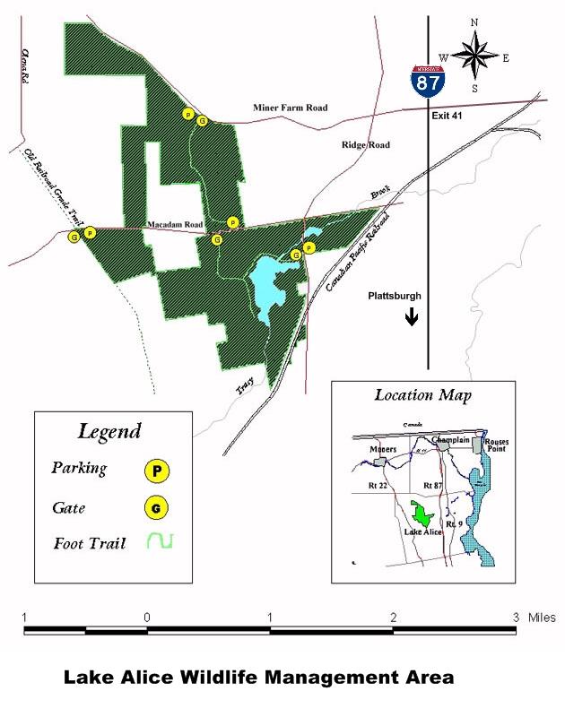 Lake Alice Wildlife Management Area