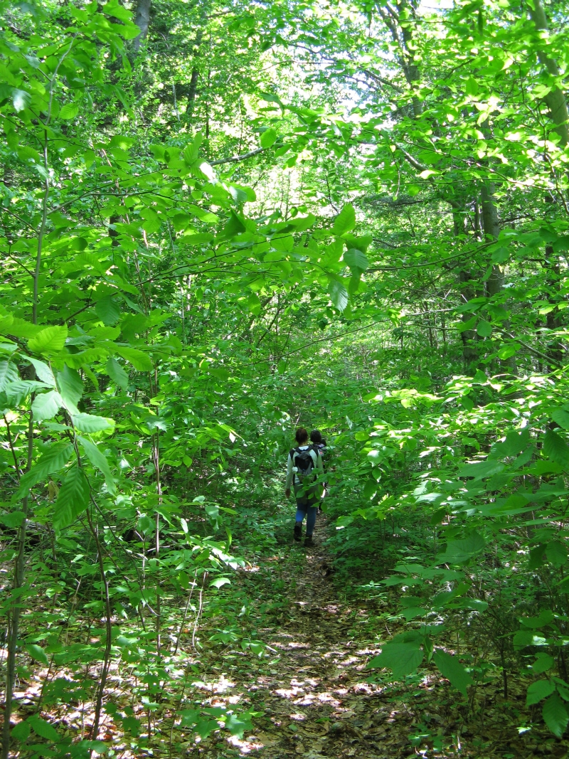 Split Rock Mountain Wild Forest - Trail